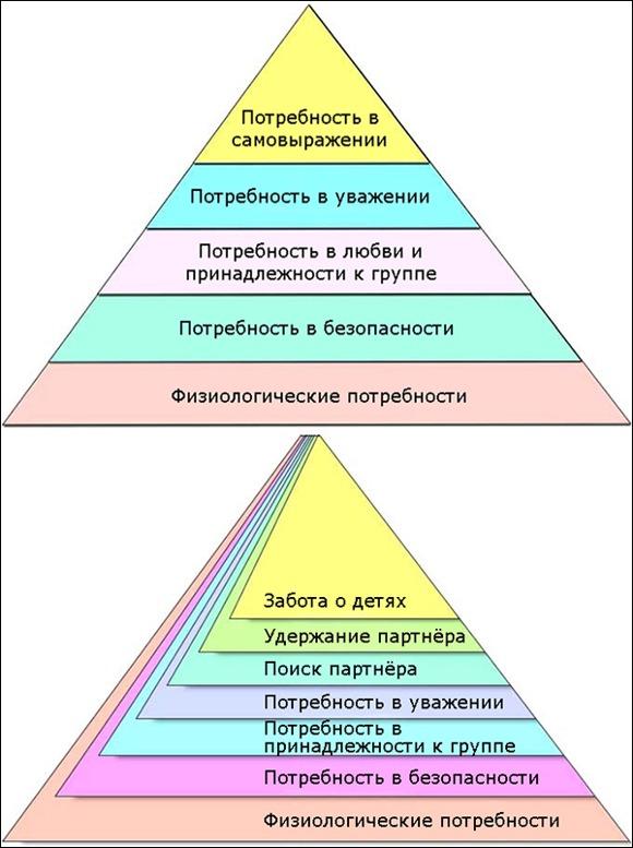 Ученые предложили новый вариант пирамиды Маслоу
