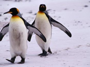 Почему пингвины охотятся днём