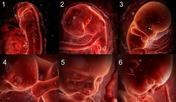 Ребенок на всех стадиях беременности