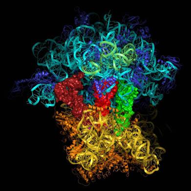 Происхождение жизни: белки против «мира РНК»