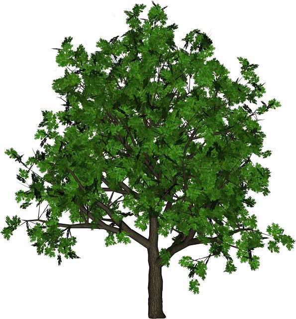 От.  85. Изменила б берёза причёску. yaranova.  Стихи о деревьях.