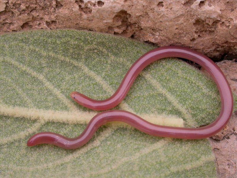Змеи вышли из-под земли