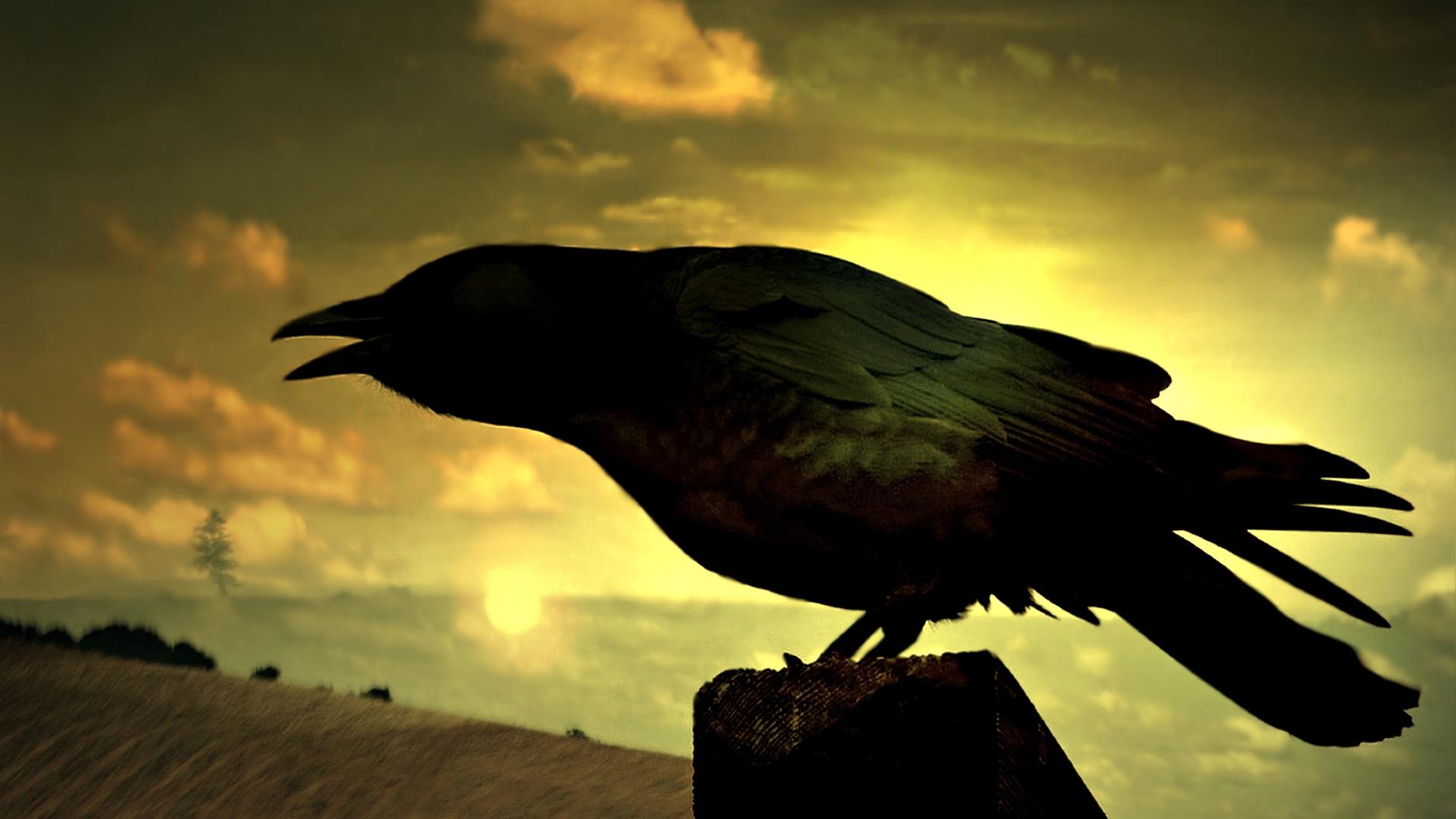 Своим умом новокаледонские вороны обязаны глазам и клюву