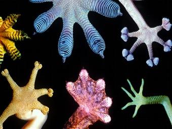 Паутина, лапки геккона, иглы дикобраза - источник инноваций в медицине