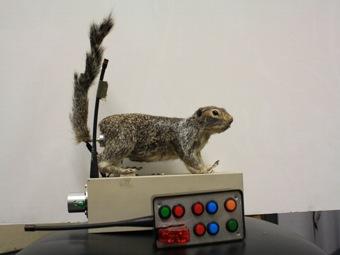 Жертва убеждает хищника не трогать ее - доказал эксперимент с роботом-сусликом