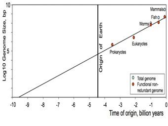 Жизнь на Земле старше самой планеты? Парадоксальное следствие применения закона Мура к эволюции