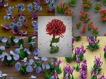 В Гарварде научились выращивать искусственные цветы из кристаллов