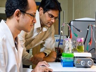 Воровать энергию фотосинтеза - новая биоэнергетическая технология