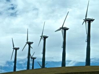 Ветроэнергетика вызывает массовую гибель птиц