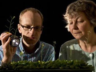 Растения каждый день выполняют арифметические вычисления