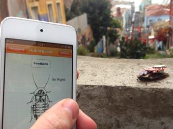 RoboRoach: любой школьник может управлять живым тараканом-киборгом