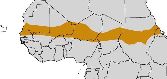 В чудовищной африканской засухе 1970-1980-х виноваты страны Запада