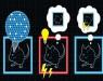 Манипуляции с мозговыми клетками мышей «вживили» им ложные воспоминания