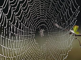 Паучьи паутины используют электрический заряд для ловли насекомых