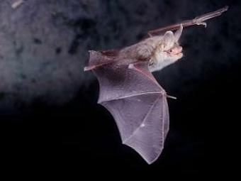 Килогерцы, килогерцы: гонка вооружений между летучими мышами и мотыльками