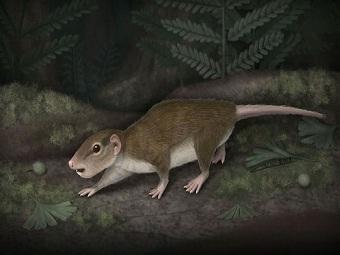 Найден один из древнейших многобугорчатых - долгожителей среди млекопитающих