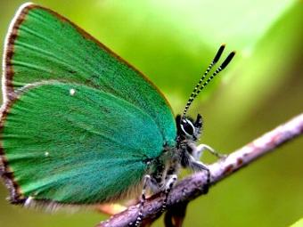 Крылья бабочки поднимают вычислительную оптику на новый уровень