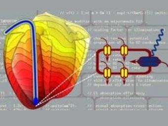 Скоро дефибрилляторы и кардиостимуляторы будут «запускать» ваше сердце с помощью света
