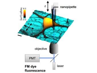Ученые впервые измерили наноразмерную нейронную активность