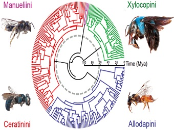 Пчёлы пережили массовое вымирание одновременно с динозаврами