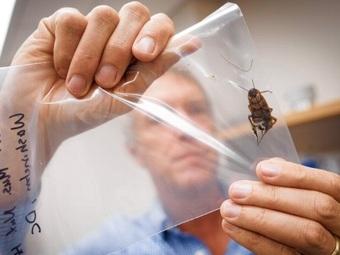 Нью-йоркские тараканы - такие же иммигранты и консерваторы, как их соседи-люди