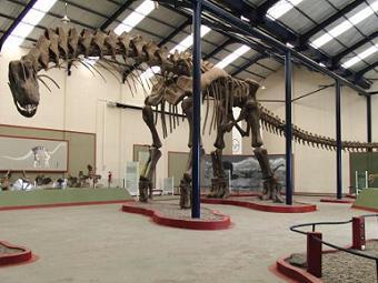 Ученые впервые реконструировали походку динозавра
