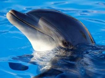 Дельфины вдохновили на создание уникального радара