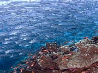 Что определяет успех рыбьих миграций?