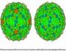 Новая модель вируса ОРЗ прояснила причины неэффективности лекарств