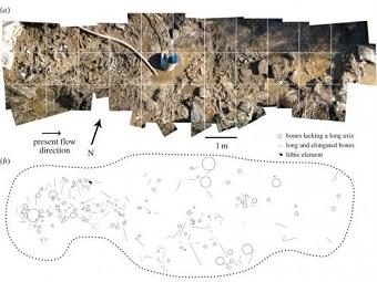 Люди жили в Америке уже 30000 лет назад: свидетельствуют кости гигантских ленивцев