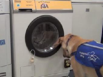 Стиральная машина,  которой могут пользоваться собаки