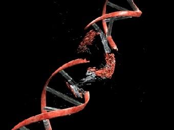 """Бактерии """"повторно перерабатывают"""" фрагменты ДНК"""