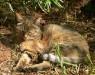 Кошки стали домашними в Китае 5000 лет назад - как и почему?