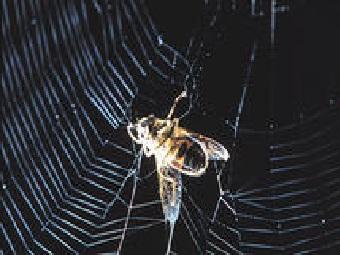 Как электричество помогает паутинам ловить добычу и измерять загрязненность атмосферы