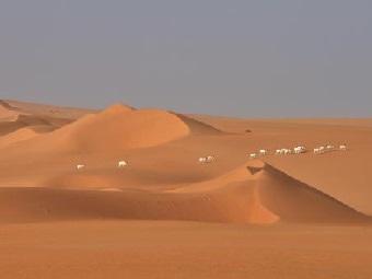 Катастрофическое исчезнование сахарской фауны