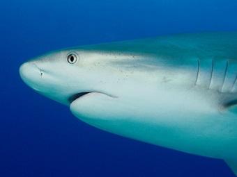 Ученые выяснили, почему к акулам лучше не поворачиваться спиной