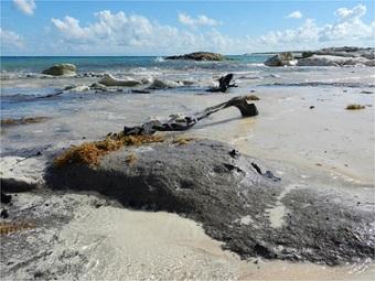 Какая экосистема встретила первых поселенцев на Багамах?
