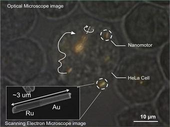 Наномоторы под управлением ультразвука путешествуют по живым клеткам