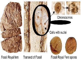 Ученые смогли «разглядеть» ДНК папоротника юрского периода