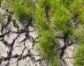 Супер-рис устойчивый к трем видам неблагоприятных климатических условий