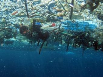 Необычные бактерии поглощают углерод в океане