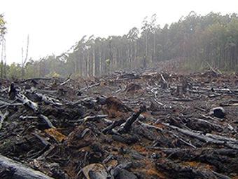 Что поможет избежать разрушительных изменений климата?