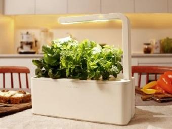 Smart Herb Garden – свежие травы всегда под рукой