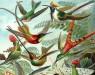 Удивительное прошлое, настоящее и будущее колибри