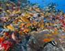 Астероид, погубивший динозавров, способствовал появлению рифовых рыб