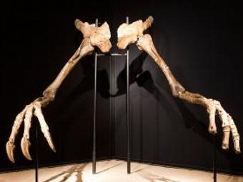 Украденная голова динозавра раскрывает странное скрещивание видов