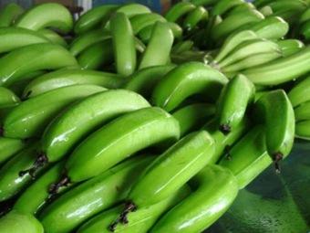 Генномодифицированный супер-банан спасет миллионы жизней