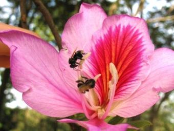 «Шепот» пчел превращается в «крик»
